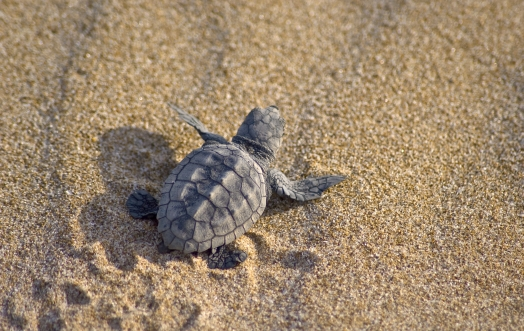 TARTALOVE: THE SEA TURTLES NEED US!