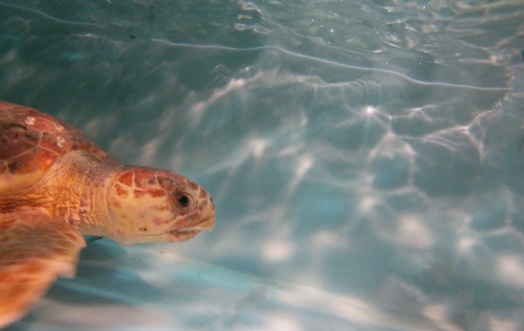 ACQUA DELL'ELBA AND TARTALOVE INVITE YOU TO FIND A NAME FOR THIS TURTLE